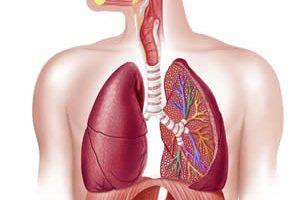 estructura-sistema-respiratorio